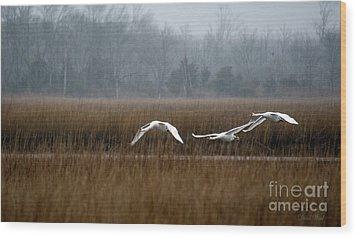 Misty Mute Swans Soaring South Jersey Wetlands Wood Print by Diana Wind