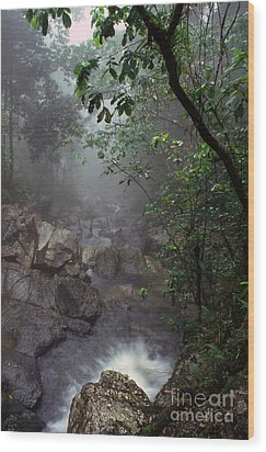 Misty Rainforest El Yunque Mirror Image Wood Print by Thomas R Fletcher