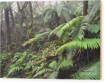Misty Rainforest El Yunque Wood Print by Thomas R Fletcher