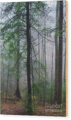 Wood Print featuring the photograph Misty Winter Forest by Thomas R Fletcher
