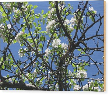 Mn Apple Blossoms Wood Print by Barbara Yearty