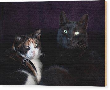 Wood Print featuring the photograph Mochi And Stinky by Laura Melis