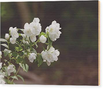 Wood Print featuring the photograph Mock Orange Blossoms by Kim Hojnacki