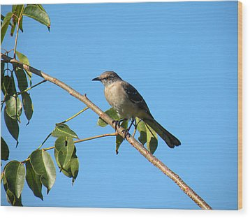 Mocking Bird Out On A Limb Wood Print by Rosalie Scanlon