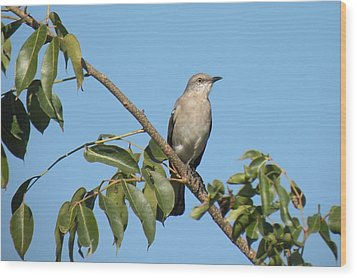 Wood Print featuring the photograph Mocking Bird by Rosalie Scanlon