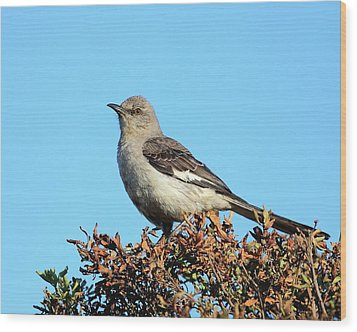 Mockingbird . 7682 Wood Print by Wingsdomain Art and Photography