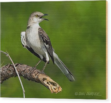 Mockingbird Wood Print by Don Durfee