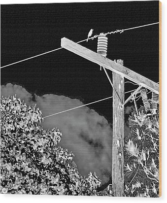 Mockingbird On A Wire Wood Print