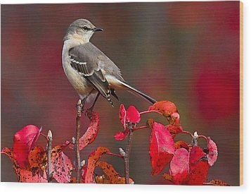 Mockingbird On Red Wood Print