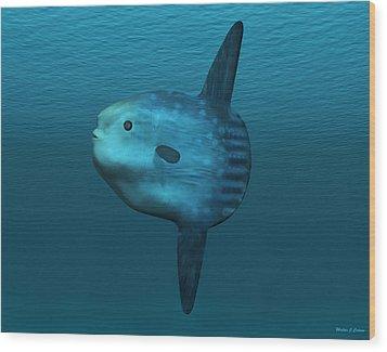 Mola Mola Ocean Sunfish Wood Print by Walter Colvin