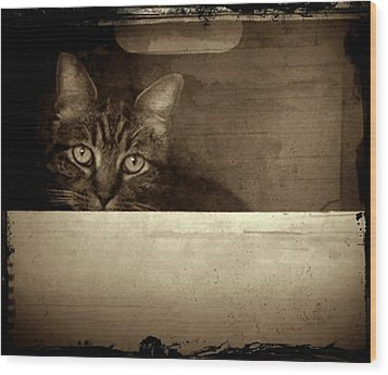 Mollie In A Box Wood Print by Patricia Strand