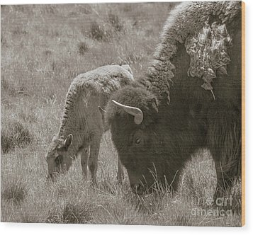 Wood Print featuring the photograph Mom And Baby Buffalo by Rebecca Margraf