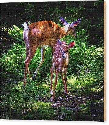 Wood Print featuring the photograph Mom And Fawn by David Patterson