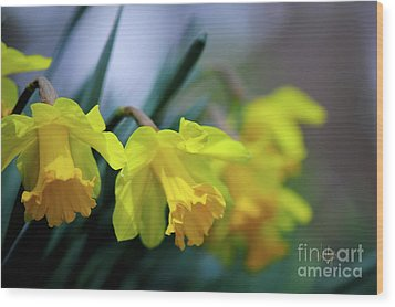 Wood Print featuring the photograph Mom's Daffs by Lois Bryan