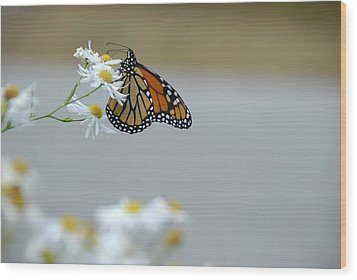 Monarch   Wood Print by AnnaJanessa PhotoArt
