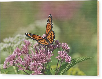 Monarch 1 Wood Print