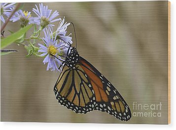 Wood Print featuring the photograph Monarch 2015 by Randy Bodkins