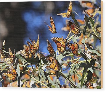 Monarch Active Cluster Wood Print