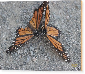Monarch Afterglow Wood Print