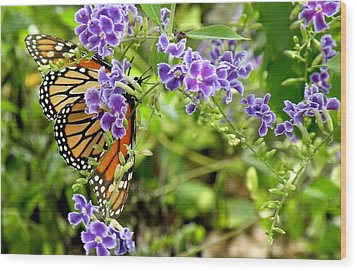Wood Print featuring the photograph Monarch And Purple Flowers by Rosalie Scanlon