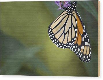 Wood Print featuring the photograph Monarch Art by Elsa Marie Santoro