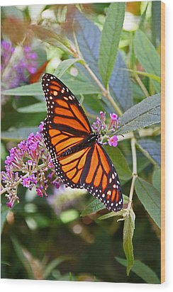Monarch Butterfly 2 Wood Print