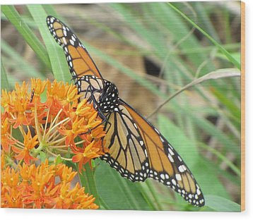 Wood Print featuring the photograph Monarch Butterfly 3049 by Maciek Froncisz