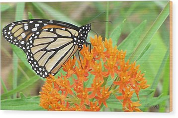 Wood Print featuring the photograph Monarch Butterfly 3050 by Maciek Froncisz