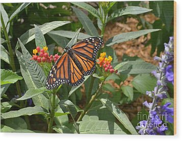 Wood Print featuring the photograph Monarch Butterfly by Carol  Bradley