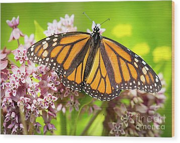 Wood Print featuring the photograph Monarch Butterfly Closeup  by Ricky L Jones