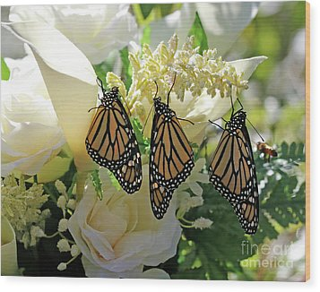 Monarch Butterfly Garden  Wood Print by Luana K Perez