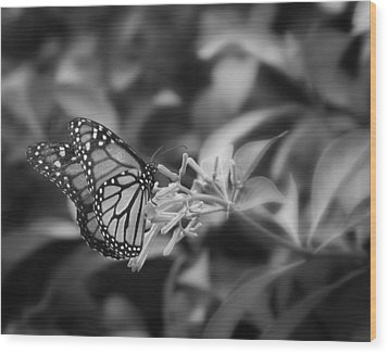 Monarch Butterfly In Black And White Wood Print by Joseph G Holland