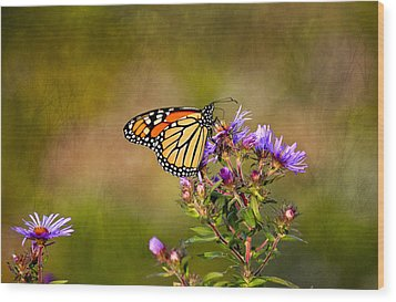 Monarch Butterfly In The Afternoon Sun Wood Print by James Steele