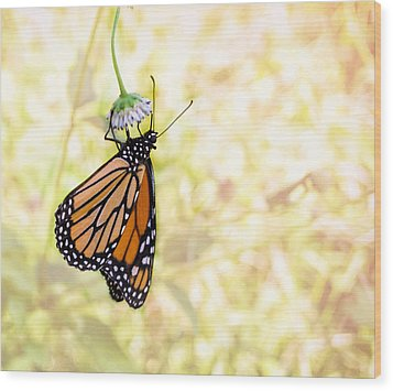 Monarch Butterfly Hanging On Wildflower Wood Print