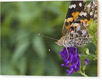 Monarch Butterfly Wood Print by Marlo Horne