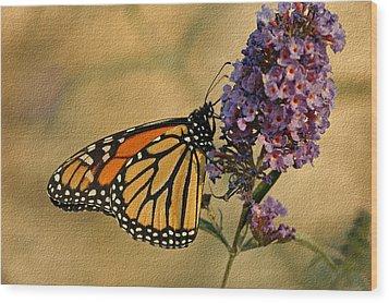 Monarch Butterfly Wood Print by Sandy Keeton