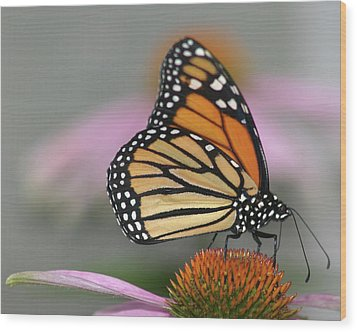 Monarch Butterfly Wood Print by Wind Home Photography