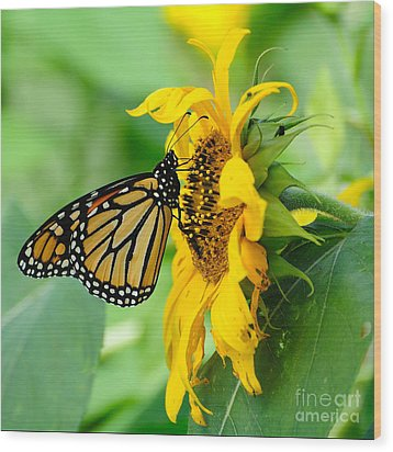 Monarch Gold Wood Print