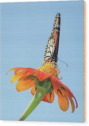 Wood Print featuring the photograph Monarch I by Dawn Currie