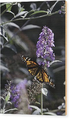 Monarch In Backlighting Wood Print by Rob Travis