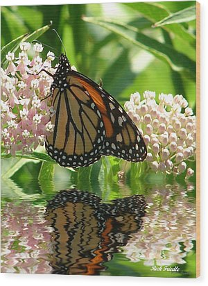 Wood Print featuring the photograph Monarch Lunch by Rick Friedle