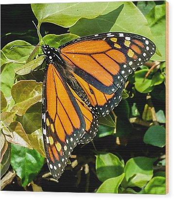 Monarch Wood Print by Mark Barclay