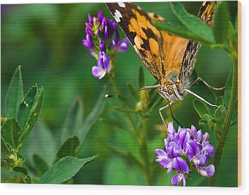 Monarch Wood Print by Marlo Horne