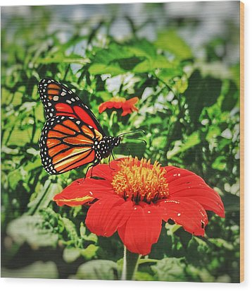 Wood Print featuring the photograph Monarch Of The Flowers  by Jame Hayes