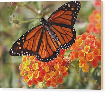Monarch On 2 Flowers Wood Print