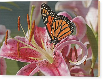 Monarch On A Stargazer Lily Wood Print