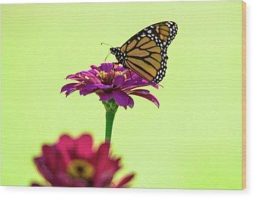Monarch On A Zinnia Wood Print