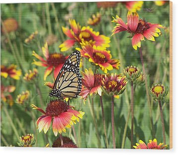Wood Print featuring the photograph Monarch On Blanketflower by Peg Urban
