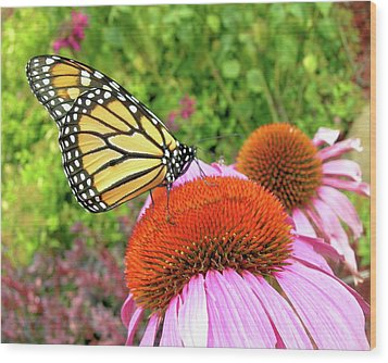 Wood Print featuring the photograph Monarch On Coneflower by Randy Rosenberger