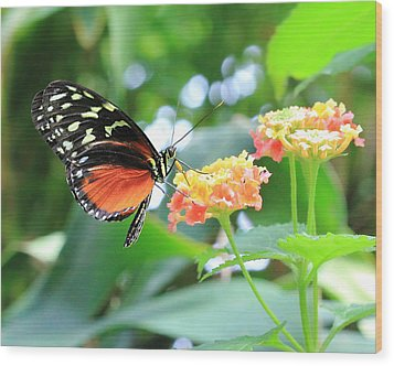 Monarch On Flower Wood Print